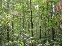 Amazonas3