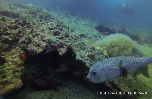 Buceo6