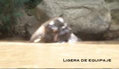 elefanteagua1