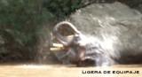 elefanteagua5