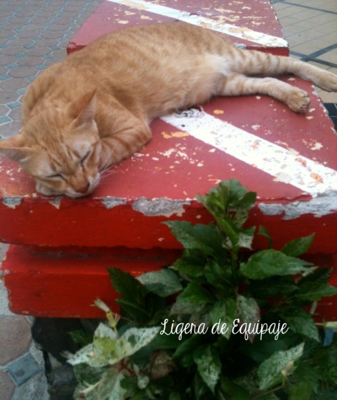 Gato Phi Phi Dive