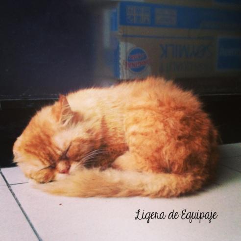 Gato Phi Phi Garfield
