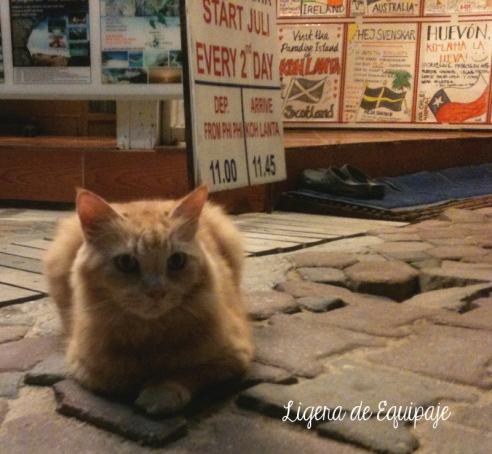 Gato Phi Phi mono