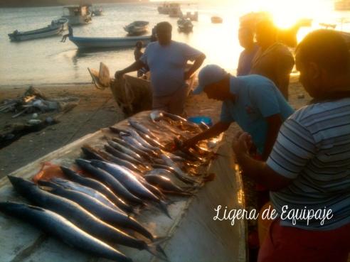 Pescadores Taganga2