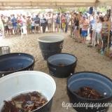 Tortugas Acuario Mundo Marino Playa