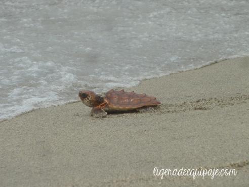 Tortugas Liberacion