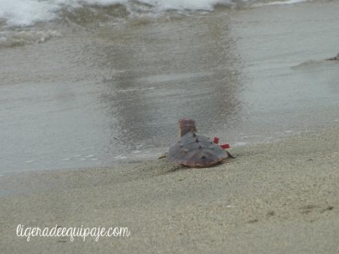 Tortugas playa2