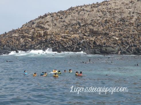 Lobos marinos Islas Palomino
